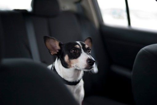 fear the backseat driver
