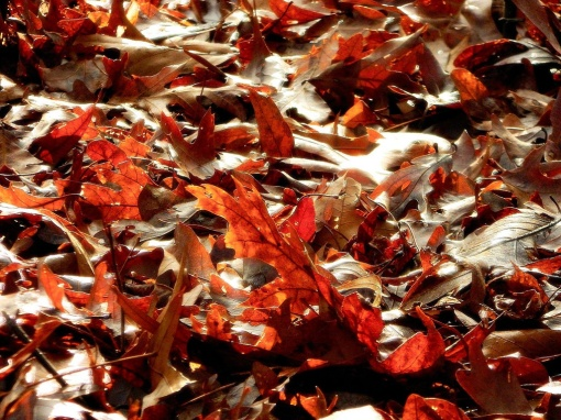 autumn-leaves-by-anthony