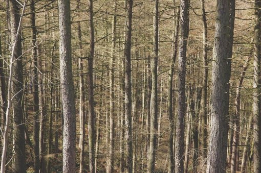 NC forest by Paper Beard