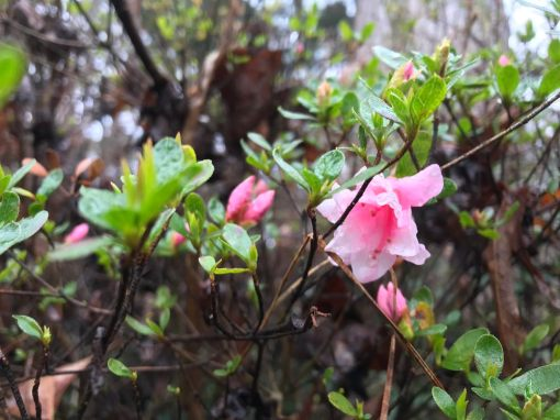 azalea buds - Free professional development resources and events for CAEs, association staff and others in the association community