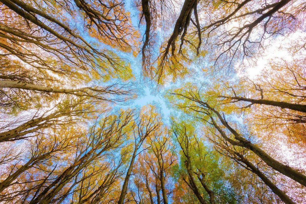 trees-5605176_1280