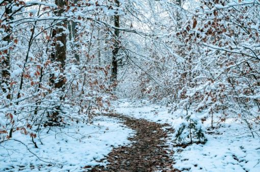 Leaf-strewn path in the snowy woods to inspire you down the path of free educational resources and events for the association management community