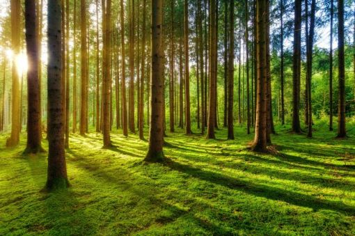Rays of the morning sun coming through the trees – inspiration for a weekly list of free educational events and resources for the association community
