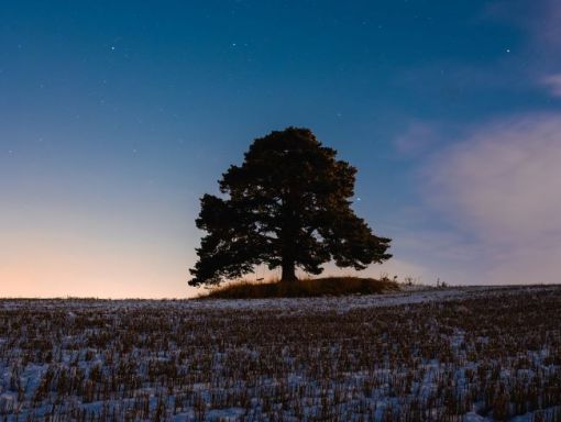 Peaceful image of a lone vibrant tree in a snowy field against a sky at sunrise – inspiration for free educational events and resources for the association management community