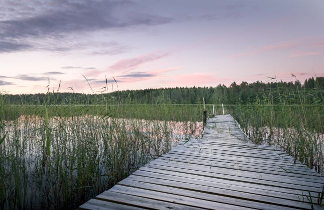 Wooden dock emerging from the tall grass on the side of a lake at sunset or sunris – inspiration for a weekly list of free educational events and resources for the association community