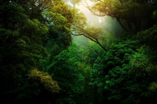 sunlight in the hazy distance of a lush grove of trees – inspiration for a weekly list of free educational events and resources for the association community