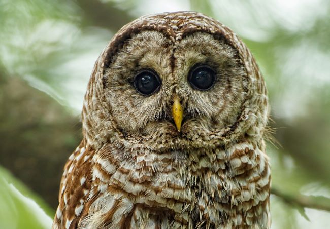 head of a barred owl – inspiration for a weekly list of free educational events and resources for the association community