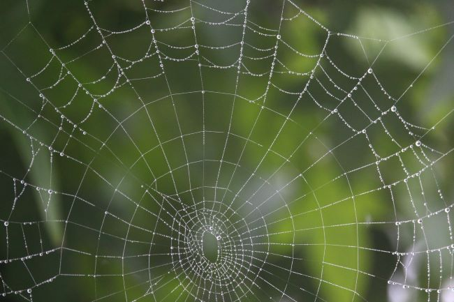 spider web in the rain – inspiration for a weekly list of free educational events and resources for the association community