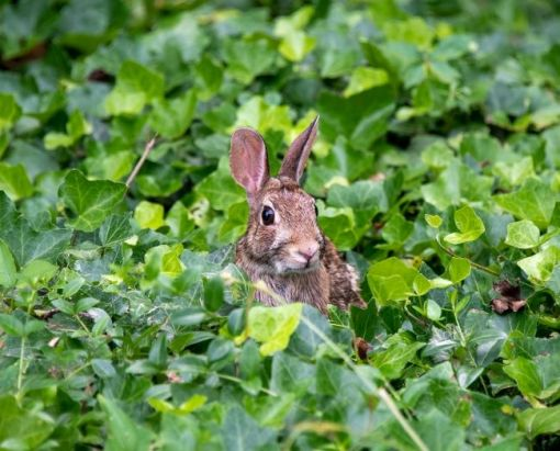 brown bunny in the ivy – inspiration for a weekly list of free educational events and resources for the association community