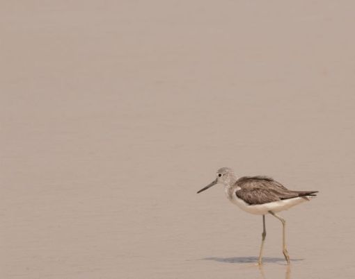 sandpiper on the beach, I'll be joining him soon – inspiration for a weekly list of free educational events and resources for the association community