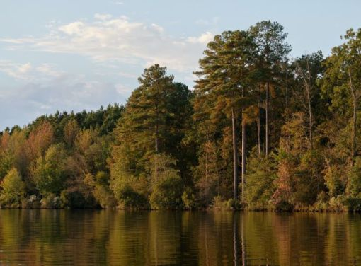 September trees alongside a lake or pond – inspiration for a weekly list of free educational events and resources for the association community
