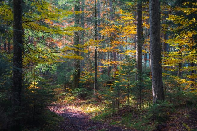 a spot of sunlight on the trail through the autumn woods – inspiration for a weekly list of free educational events and resources for the association community