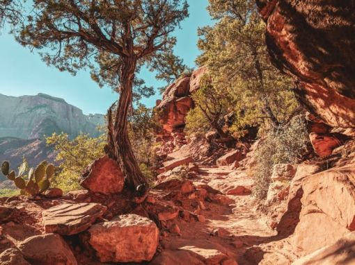 trail in Zion National Park – inspiration for a weekly list of free educational events and resources for the association community