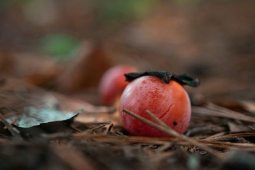wild persimmons on the ground – inspiration for a weekly list of free educational events and resources for the association community