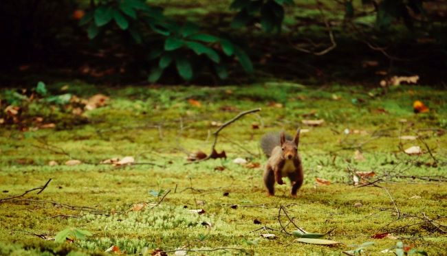 scampering squirrel – inspiration for a weekly list of free educational events and resources for the association community